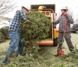 "John Byrne/Tribune Sparks city employees David Bresee (left) and Jesse Hon were busy Monday recycling Christmas trees at the Shadow Mountain Sports Complex in Sparks. The trees are turned into mulch and even food for goats through a program overseen by the Keep Truckee Meadows Beautiful organization.  The recycling program uses ""chippers"" from the city of Sparks and other government entities. Residents can recycle trees through Jan. 10 at various drop-off locations."