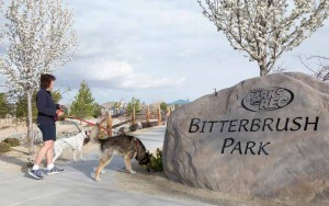 John Byrne/Tribune Sparks resident Lynn Rapp takes walks her dogs at Bitterbrush Park on Monday morning. A recent survey shows that adding more local parks topped the list of how to improve Sparks by the year 2030.